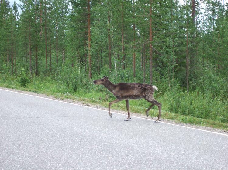 mit-dem-fahrrad-ans-nordkap.de fahrrad nordkap thumbs fahrrad-reise-tour--dscf2037-finnland.jpg