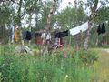 mit-dem-fahrrad-ans-nordkap.de fahrrad nordkap thumbs fahrrad-reise-tour--dscf2164-norwegen.jpg