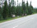 mit-dem-fahrrad-ans-nordkap.de fahrrad nordkap thumbs fahrrad-reise-tour-dscf2075-finnland.jpg